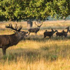 Artemisan plantea alternativas que eviten las graves consecuencias de prohibir la caza en Parques Nacionales