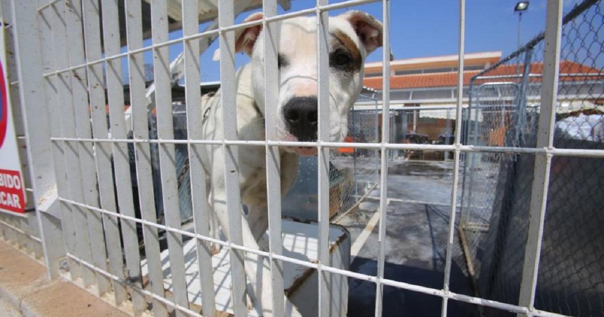 Mazazo al animalismo en Valencia: el Ayuntamiento pone fin al monopolio de la protectora de animales