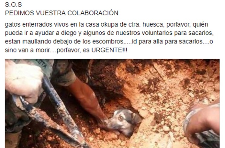 Una protectora publica una foto falsa pidiendo ayuda para animales