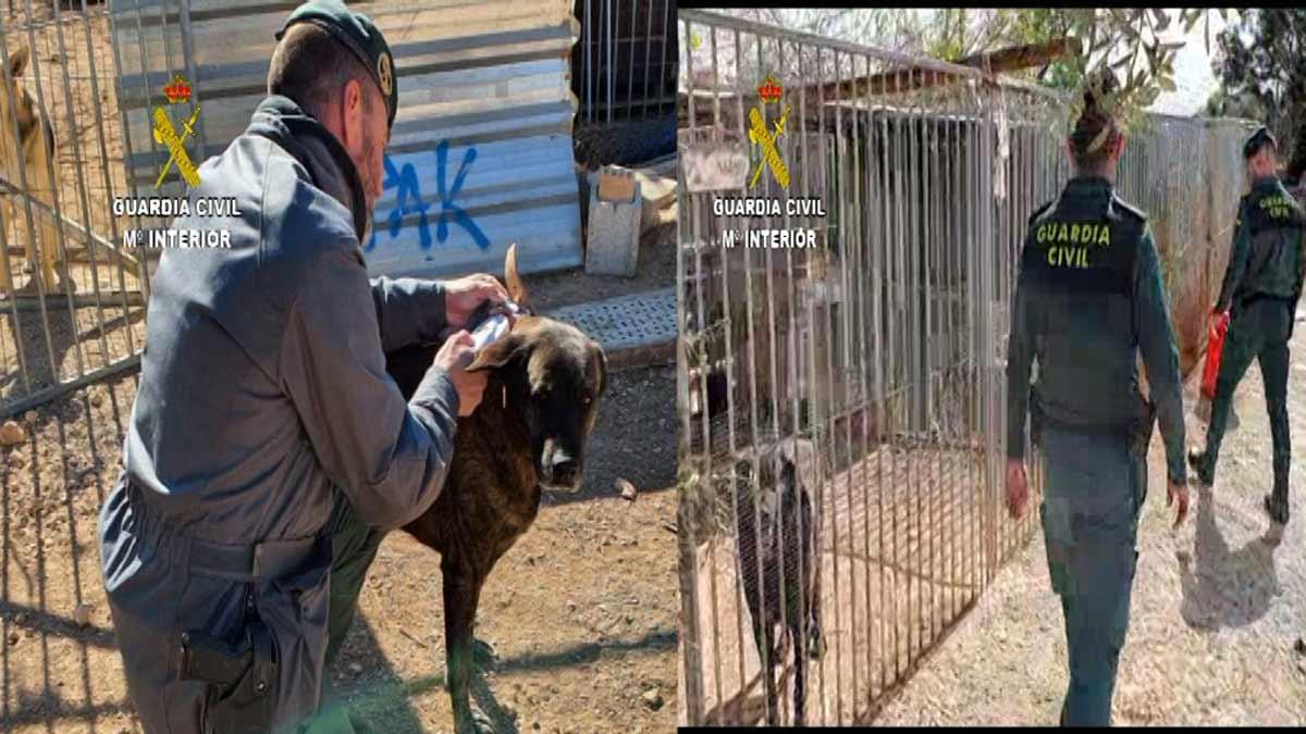 Detienen a la dueña de una protectora en Tarragona por matar 500 animales por los que recibía subvenciones