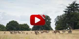 puesto-querencioso-ciervos