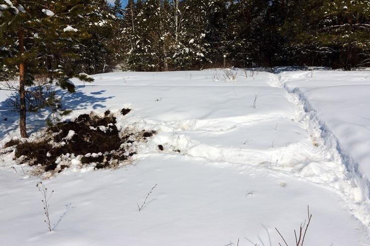 rastro jabali en la nieve