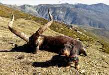 rastro perros sangre AEPES