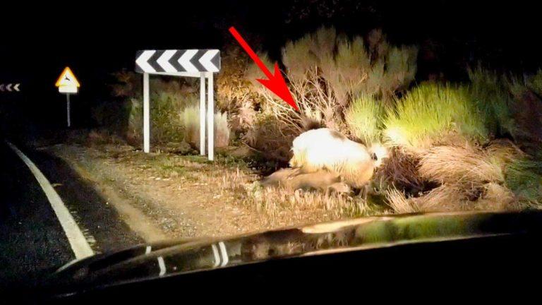 Momento del vídeo que muestra la reacción del jabalí tras el accidente.