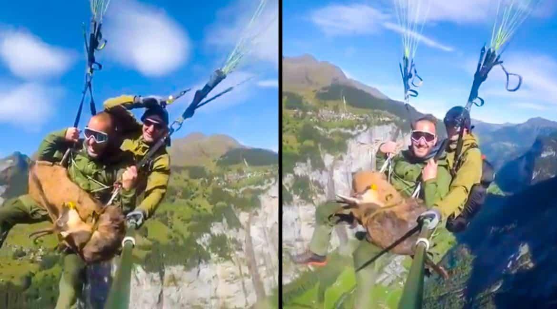 Sube a una montaña, caza un rebeco y baja con él ¡en parapente!