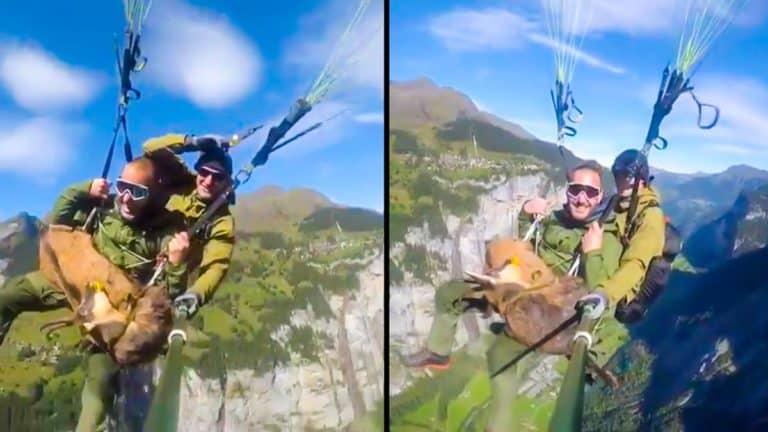 Dos momentos del vídeo en los que el cazador desciende con el rebeco.