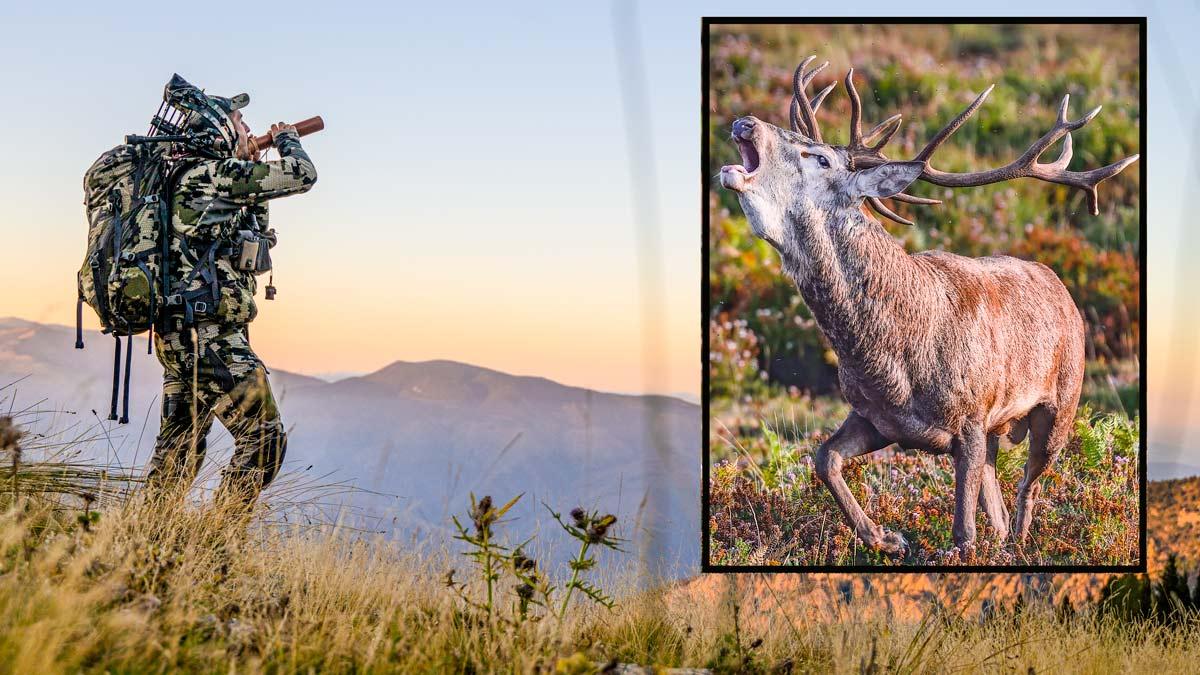 10 consejos y técnicas para cazar ciervos en berrea usando el reclamo