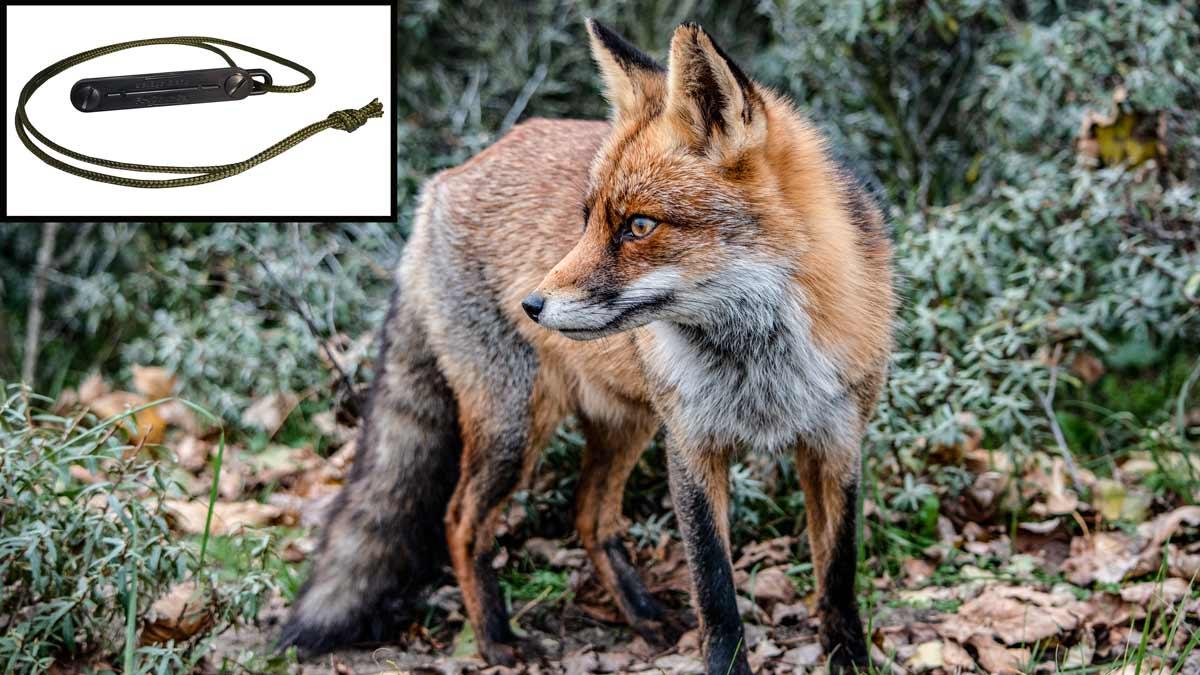 Este es el reclamo para cazar zorros mejor valorado por los cazadores en Amazon