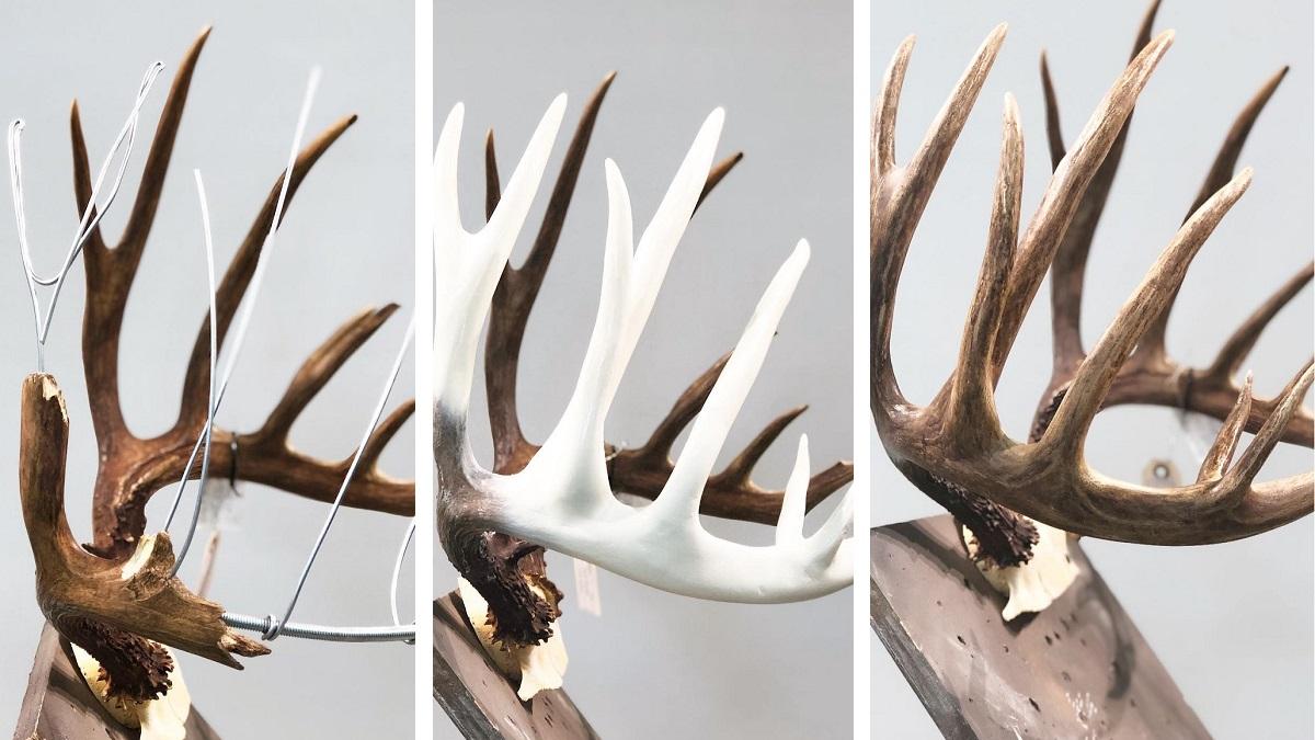 Así es el increíble proceso de reconstrucción de una cuerna de ciervo rota justo antes de cazarlo