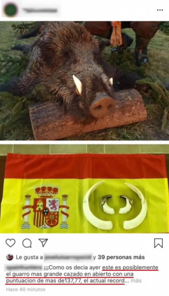 récord de España jabalí