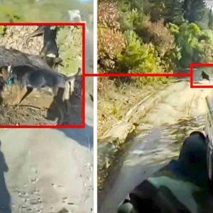 Cruza medio coto corriendo para cazar un jabalí con escopeta en un lance de infarto