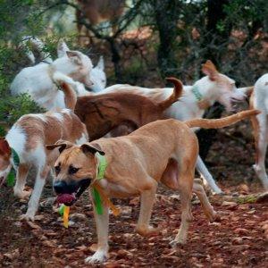 RFEC y ARRECAL piden adecuar la normativa de núcleos zoológicos a la realidad de la caza