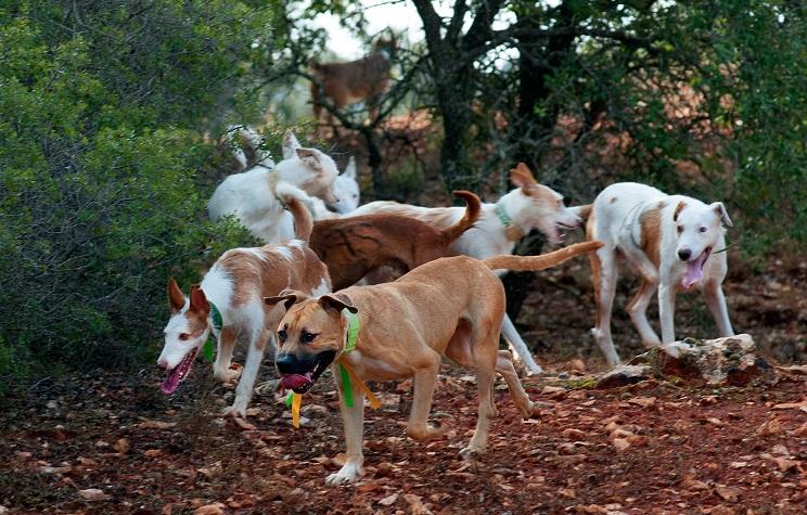 El rehalero del polémico vídeo habla: «hice todo lo que pude por salvar a los perros»