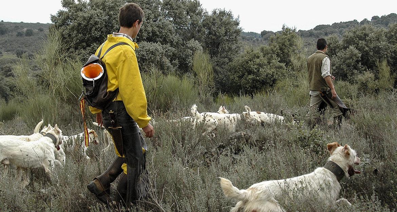 ARRECAL exige la rectificación de las normas de protección animal de Madrid y Valencia teniendo en cuenta a las rehalas
