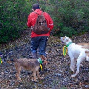 Condenan a un rehalero a nueve meses de cárcel por cortar orejas y rabos a sus perros