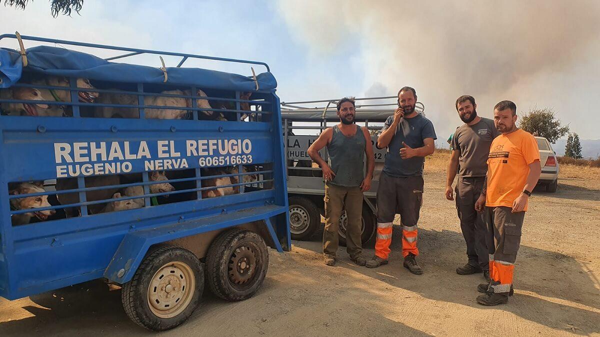 Decenas de cazadores ayudan a un rehalero a salvar a sus 37 perros del incendio de Huelva y después van a combatir las llamas
