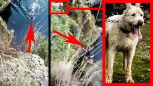Un rehalero se arroja a un río gélido para rescatar a su perro de caza