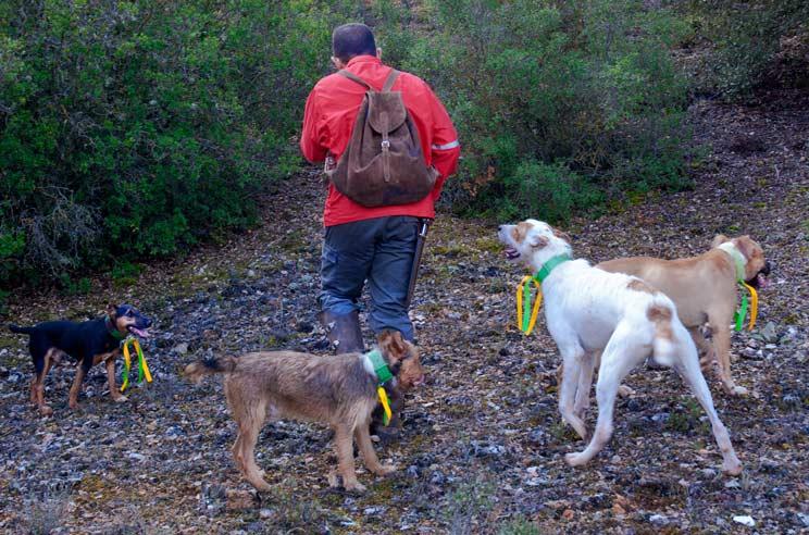Rehalero con perros con oreja y rabos cortados en una imagen de archivo. /Amable González