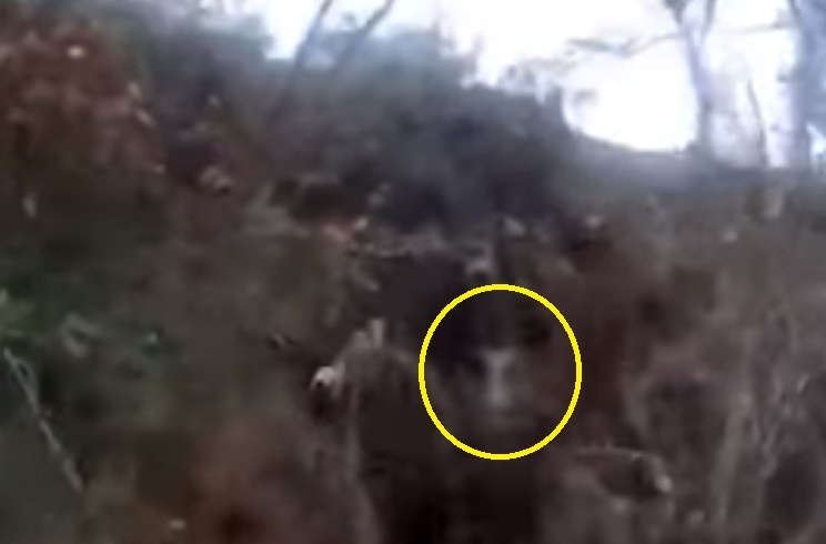 Este cazador entra a unas zarzas a rematar a un jabalí y acaba revolcado
