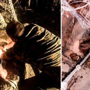 Una hembra de jabalí se atasca en una tubería y la Policía llama a los cazadores para rescatarla