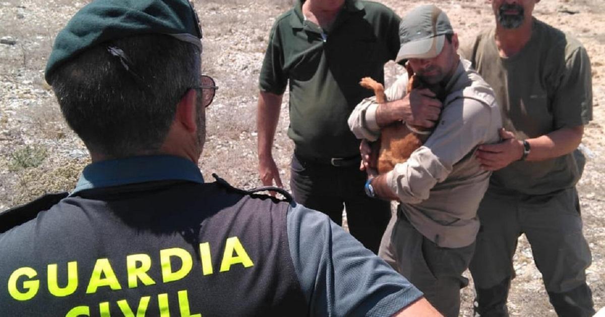 Cinco ejemplos de cazadores que rescataron a sus perros de los que nadie habla