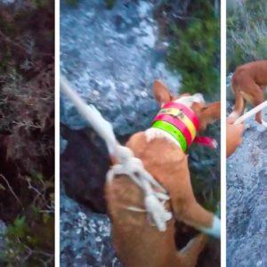 Un cazador pierde a su perra, la encuentra en una sima de 15 metros y realiza este heroico rescate