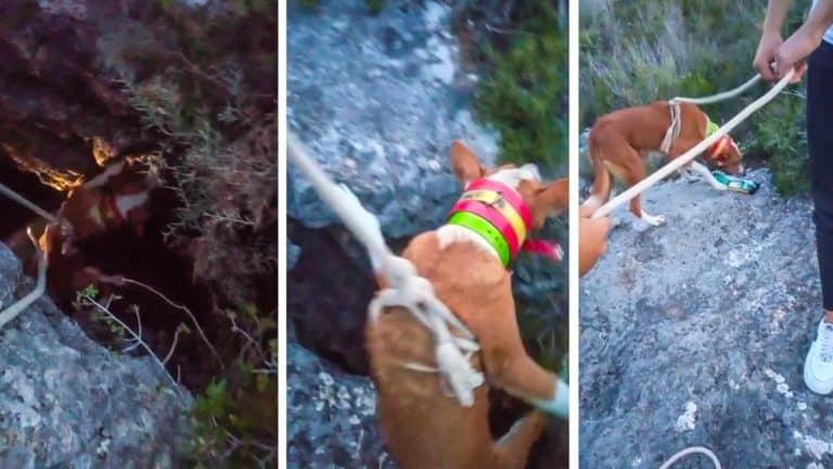 Varios momentos del rescate de la perra de caza.