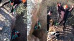 Imágenes del rescate del perro. /JyS
