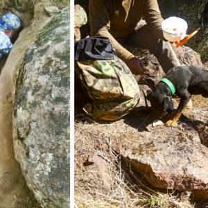 Dos cazadores rescatan a su perro, atrapado 48 horas bajo tierra tras perseguir a un zorro
