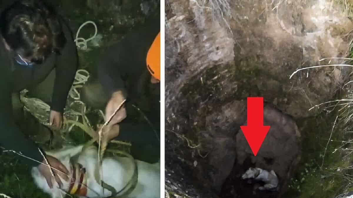 Un perro de caza cae a un pozo y su dueño se juega el tipo para rescatarlo