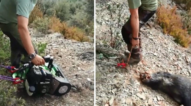 ¿Conocías este curioso invento para sacar las reses del monte sin esfuerzo?