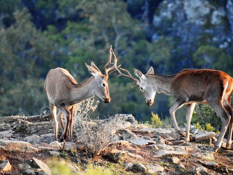 Los Amigos del Águila Imperial cargan contra las asociaciones ecologistas