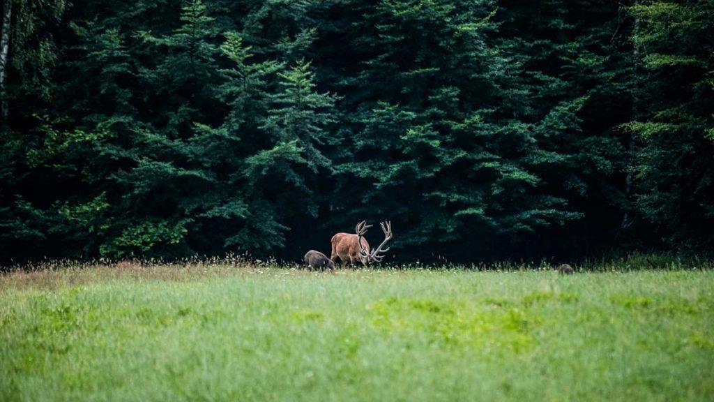 ¿Cuántos animales cazables ves en la foto?