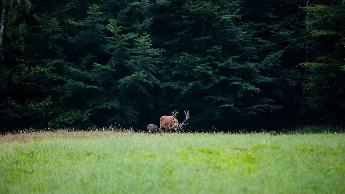 Reto visual: ¿Cuántos animales cazables ves en la foto?
