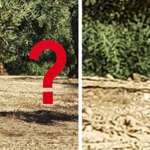 Reto visual: ¿Eres capaz de ver el conejo que aparece en esta imagen?