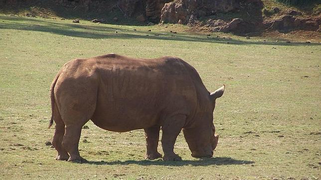 ALPHAGALILEO.ORG Un rinoceronte en su medio natural