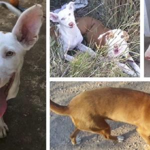 Roban todos los perros a un cazador de Castellón, si reconoces alguno de ellos ¡denuncia!