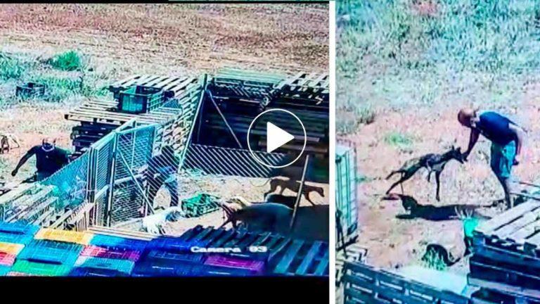 Dos momentos del vídeo en el que se llevan a los galgos.