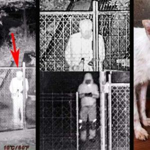 Roban su perra de caza y pide ayuda para difundir su imagen y la de los ladrones