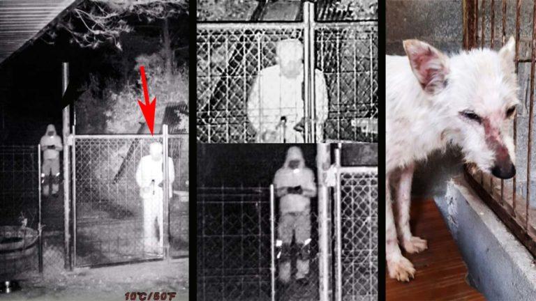 Imágenes del robo de la perra de caza y la podenca.