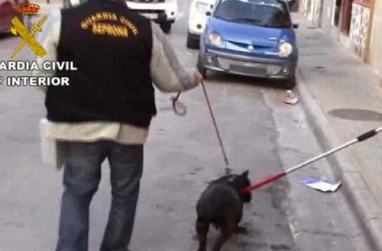 Cae una banda criminal dedicada al robo de perros de caza