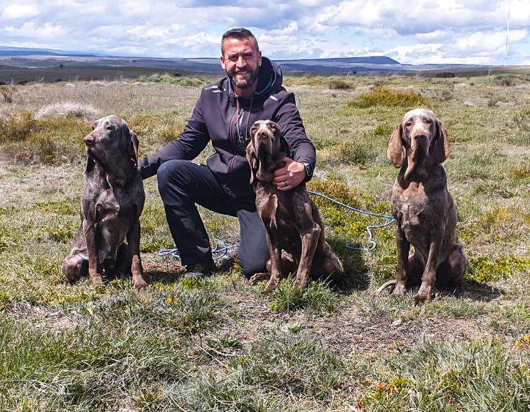 robo perros de caza