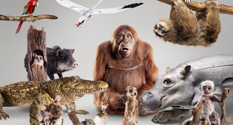 La BBC crea robots con forma de animales para grabar una serie documental