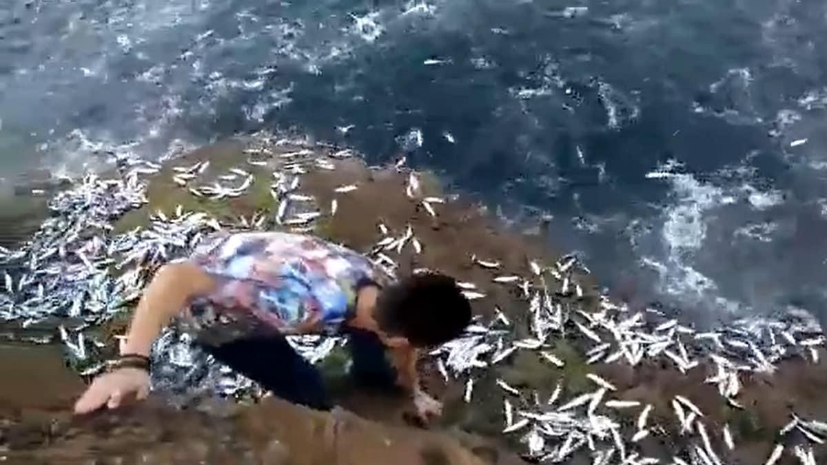 Un joven captura a mano miles de sardinas que salieron hacia la orilla