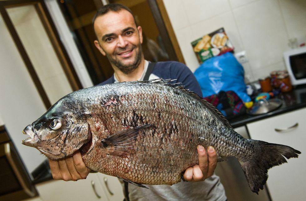 Llamamiento a los pescadores para recabar datos sobre los sargos anómalos