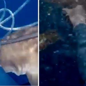 Un pescador defiende su captura del ataque de varios tiburones a punta de cuchillo