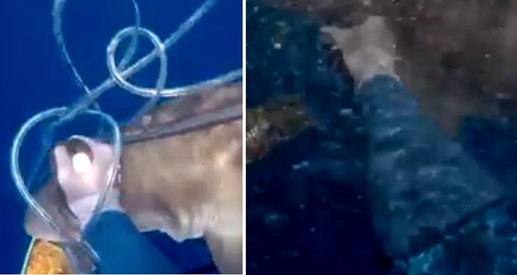 tiburón atún buzo