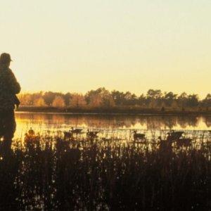 La RFEC pide una explicación al MITECO por el escándalo de la prohibición de plomo en la caza