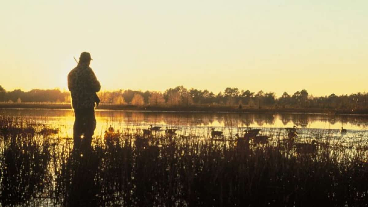 La RFEC suspende todas las competiciones oficiales de caza de España para 2020