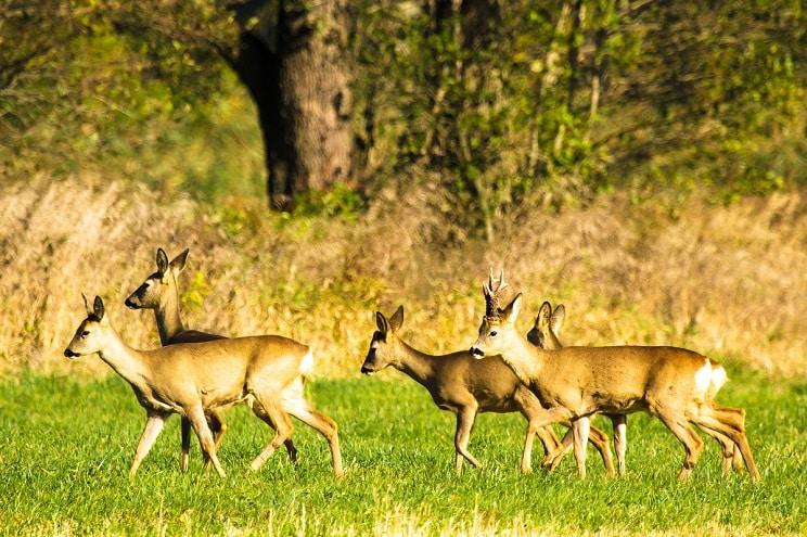 Ahora sí: la caza queda prohibida (temporalmente) en Castilla y León